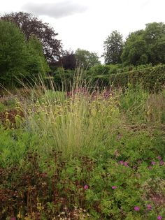 Piet Oudolf © Nicola Berry Time and Space garden and planting design