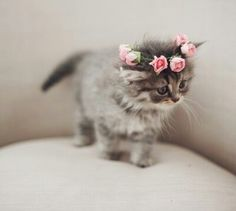 This kitten is a princess -- The Enchanted Storybook
