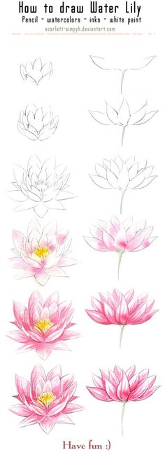 20 Delicate Colorful Watercolor Flowers Painting Tutorials In Images 20 zarte bunte Aquarell Blumen malen Tutorials in Bildern Plant Drawing, Painting & Drawing, Drawing Flowers, Lotus Painting, Lotus Drawing, Lilly Flower Drawing, Tattoo Flowers, Flowers To Draw, How To Draw Flowers Step By Step