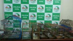 POLÍCIA DO PARÁ                                 Ao Alcance de Todos!: POLÍCIA CIVIL RESGATA 20 AVES DA FAUNA SILVESTRE V...