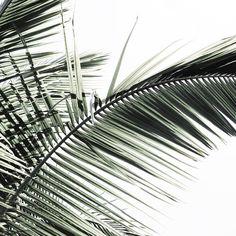 Via @aesencecom | Minimal Plant Inspo
