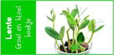 Hier vind je een groei en bloei boekje waarin de kinderen kunnen bijhouden hoe het groeien van bijv. een boon of plant verloopt.