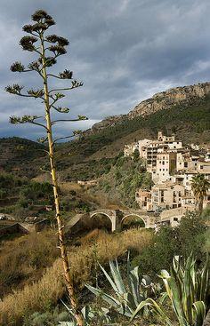 L'atzavara de La Vilella Baixa, Priorat (Catalunya - Catalonia)