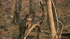 owl. ownd
