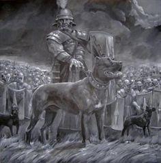 Historical pic art, Cane Corso Roman gladiator warrior dogs