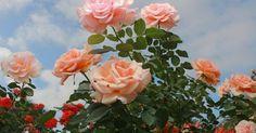 Just Pinned to Flowers: pinterest // @tiffanybenbow http://ift.tt/2pXZvsr