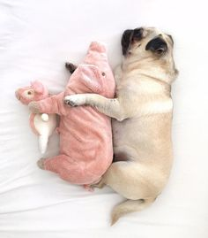 """10.6k Likes, 179 Comments - Loulou the Pug (@pugloulou) on Instagram: """"Big spoon Medium spoon Little spoon """""""