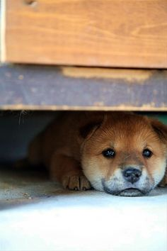 """""""If I stay real still, no one will see me."""" - Dog"""