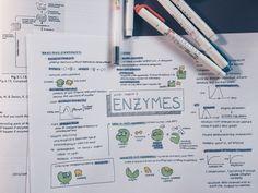 """etudiestudie: """" enzymes mindmap done! """""""