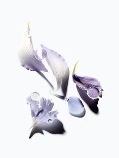 pastel purple flower petals and water droplets Iris Flowers, Flower Petals, Still Life Photography, Beauty Photography, Floral Photography, Parfum Flower, Dior Makeup, Makeup Geek, Eye Makeup