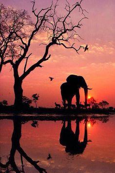 Imagen de elephant, sunset, and animal