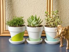 Succulents in stylish planters are great for dorm rooms! Get more decorating ideas >> http://www.hgtv.com/design/make-and-celebrate/handmade/33-diy-dorm-room-ideas-pictures?soc=pinterest