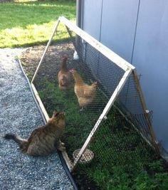 No tutorial, but a quick easy project, anyway.  Chicken tractors are great for providing free chicken food, while they scratch up and fertilize the ground!