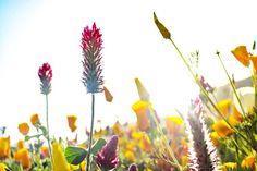 明石海峡公園���� #淡路島 #楽しい #旅 #兵庫 #公園 #hyogo  #明石海峡公園  #綺麗 #カメラ初心者  #flowers  #旅行 #写真 #可愛い #赤 #red #flowerslovers  #花 #canon #naturelover  #カメラ初心者 #photo  #eoskissx8i  #一眼レフ  #一眼レフ初心者  #ふんわり #flowerstagram  #lovers_garden  #花好きな人と繋がりたい  #green #緑 http://gelinshop.com/ipost/1519305164174225129/?code=BUVp_9IBW7p