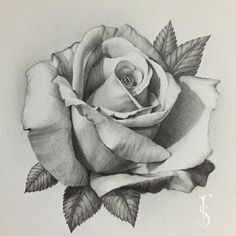 Everything finished with this rose, it's my favorite that I've drawn so far … - diy tattoo project Rose Tattoos, Flower Tattoos, Body Art Tattoos, Tatoo Rose, Pencil Art Drawings, Drawing Sketches, Drawing Drawing, Drawing Tips, Realistic Rose Drawing