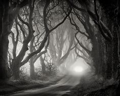 The Dark Hedges in Co Antrim before sunrise by Gary McParland
