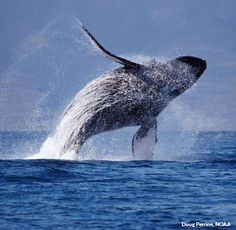 Don Lichterman: A Whale Of A Week