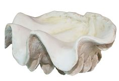 Decorative Clam Shell, Small on OneKingsLane.com