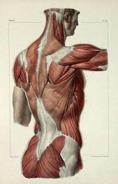 Anatomía de espalda