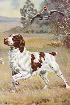 We offer vintage Brittany Spaniel art prints, pictures, gifts and artwork. Brittany Spaniel Dogs, Spaniel Puppies, Cocker Spaniel, Hunting Art, Hunting Dogs, Pet Dogs, Dogs And Puppies, Dog Paintings, Costumes