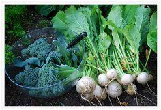 NEW! Fall Garden Seed Bank | 20-in-1 Seed Kit + BONUS! | SeedsNow.com