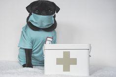 DIY Pet First Aid Kit | www.thepugdiary.com