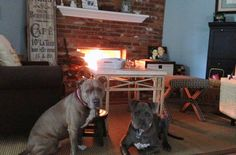"""""""One or more of your dogs must be on the so-called 'aggressive' breed list,"""" says Rouzeau, meaning pit bulls, huskies, Rottweilers, or any of the other dogs that landlords tend not to welcome, or even allow, into their rentals."""