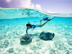 grand cayman, grandcayman, stingray citi, cayman islands, stingrays, family vacations, place, swimming, bucket lists