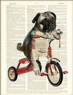 Pug Art Print Mike the Trike pug dog on a tricycle original art vintage dictionary page book art print.