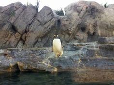 Zooooo! penguins socute (:
