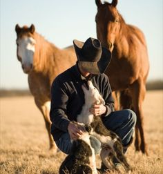 Cowboy, horses, and the dogs