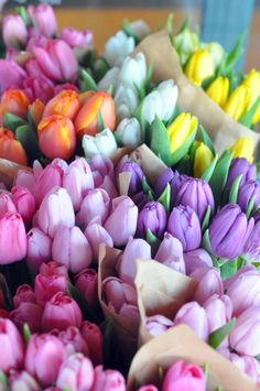 Gorgeous tulip flowers + pink + purple + yellow + orange
