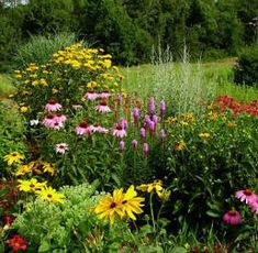 Flower bed border ideas garden pinterest flower bed for Hearty ornamental grasses