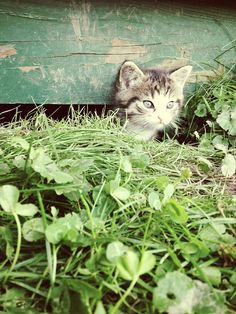 Cat under green house.