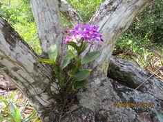 Orquídea (Fotografía Joselito Vargas)
