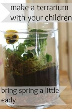 A terrarium to make with your children -- Bring spring a little early | montessori works