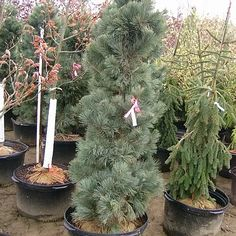 My Wishlist Trees And Shrubs, Plants, Plant, Planets