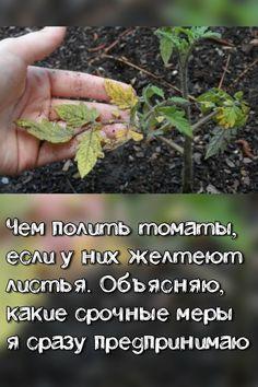 Politics, Herbs, Garden, Plants, Garten, Gardening, Herb, Plant, Political Books