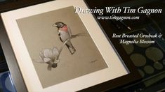 How To Draw A Grosbeak and Magnolia Flower Blossom Full Drawing Lesson by Tim Gagnon Painting Videos, Painting Lessons, Drawing Lessons, Art Lessons, Painting Tutorials, Online Drawing, Magnolia Flower, Blossom Flower, Art Techniques
