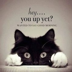 Good Morning Quotes, Funny Good Morning Wishes, Inspirational Morning Quotes With Images Good Morning Beautiful Quotes, Good Morning Quotes For Him, Morning Inspirational Quotes, Good Morning Messages, Good Night Quotes, Good Morning Wishes, Good Morning Cat, Good Morning Animals, Morning Coffee