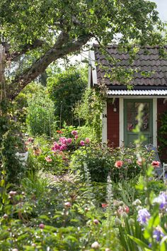 Want garden landscaping ideas? assume a see at our QandA lead on how to transform your uncovered reveal into the landscape garden of your . -- You can get more info by clicking on the image. Swedish Cottage, Red Cottage, Garden Cottage, Meadow Garden, Dream Garden, Back Gardens, Outdoor Gardens, The Secret Garden, Magic Garden