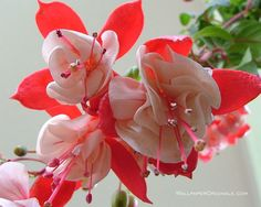 lovely--flowers