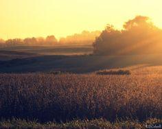 Farmland Sunrise by RDColwellArtPrints on Etsy, $15.00