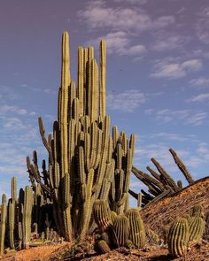 """""We travel not to escape life, but for life not to escape us"" ~ Anon 🌵 . . . . #cactus #cactuscountry #visitsuncountry #wandervictoria #australia #landscape #ic_landscapes #travel #traveling #instatravel #wanderlust #travelphotography #neverstopexploring #ig_australia #nikon #mynikonlife #global_hotshotz #travelblogger #wow_australia #thegreatoutdoors #letsgosomewhere #agameoftones #travelstoke #melbournephotographer"" by @adrian_rankin_photography. #fashionbloggers #bbloggers #fbloggers…"