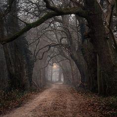 magic trees.