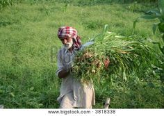 An elderly Indian Farmer with some grass