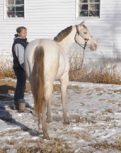 JJ Proceed to Party, Champagne Quarter Horse Stallion
