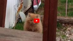 When a kitten was spotted searching for food outdoors in Jackson County, WV, just weeks before Christmas, rescuers from Operation Fancy Free knew they had to act fast. They set traps in hopes of catching the tiny fuzzball before temperatures dropped dangerously low. Once they caught the kitten, they took him to the vet. Much …