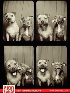 perros rescatados cabina fotos