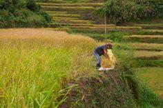 ElMent Fotky z Filipín » ElMent